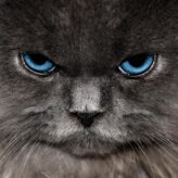 Chování koček