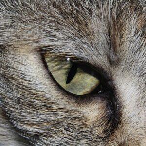 Čím krmit kočku