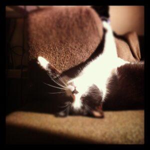 Cukrovka u koček