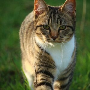 Jak dát kočce prášek