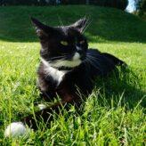 Jak dlouho žije kočka
