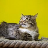 Jak odstranit zápach kočičí moči