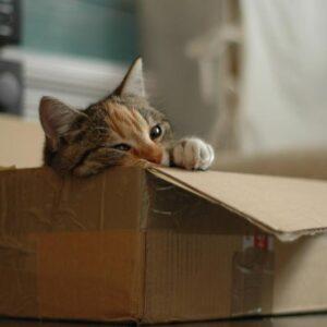 Kdy kastrovat kočku
