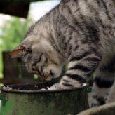 Když kočka nežere