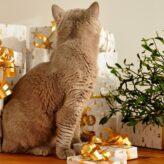Kočičí kalendář