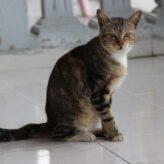 Kočičí mor