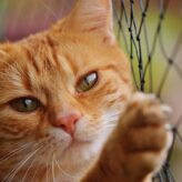 Kočičí vrnění