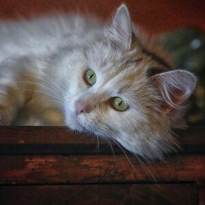 Kostra kočky