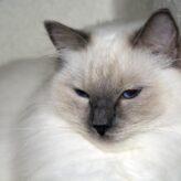 Nemoci koček dle příznaků