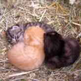 Odstavení koťat od kočky