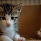 Péče o koťata: jak se starat o kotě