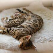 Porod kočky