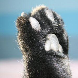 Stříhání drápků koček