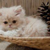 Výživa koťat: jak krmit kotě