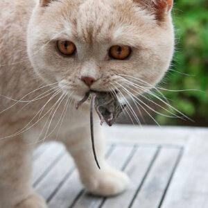 Žrádlo pro kočky: jak krmit kočku