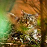 Kočičí paraziti u koček