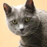 Nechutenství u kočky