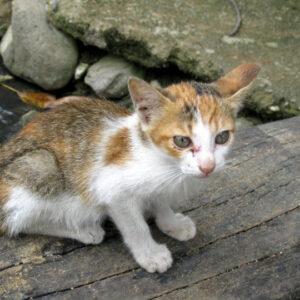 Očkování koček