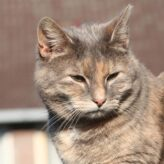 Rýma u koček