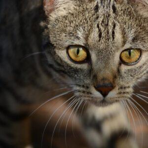Tasemnice u koček