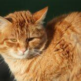 Útulek pro kočky – Brno