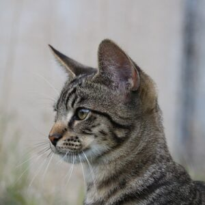 Útulek pro kočky – Ostrava