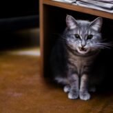 Vzteklina u koček