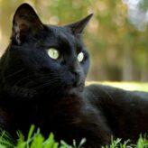 Zácpa u koček